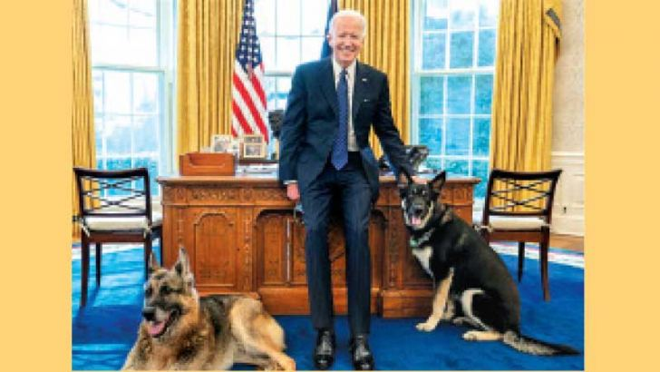US President Joe Biden poses with 'first dogs' Champ and Major in the Oval Office.
