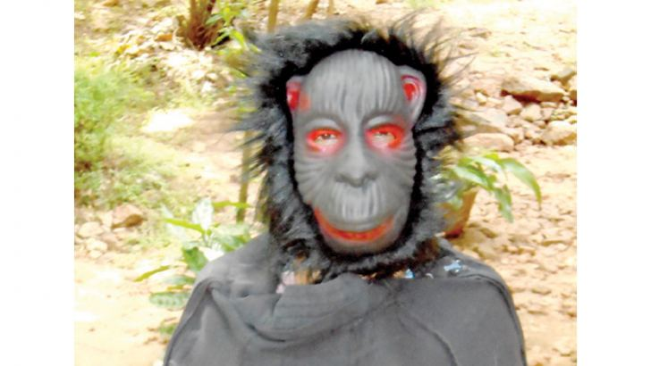 A woman in the Galewela  area dressed as a big ape  to scare monkeys away.